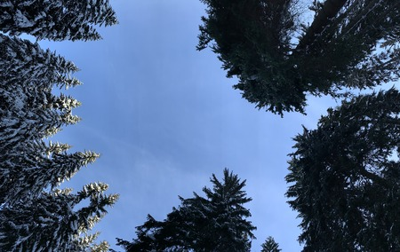Bottom view to half circle of aspiring up the tops of snow-covered pines .