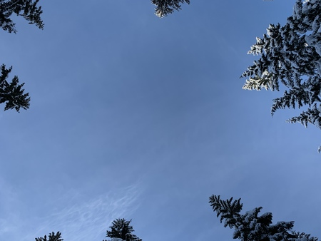 Bottom view to half circle of aspiring up the tops of snow covered pines . 版權商用圖片