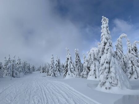 On a frosty beautiful day among high mountains are magical trees covered with white fluffy snow against the magical winter landscape. Scenery for the tourists. With ski trails in fresh snow