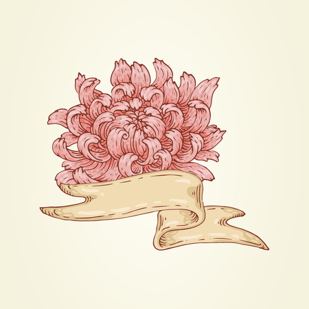 The hand-drawn image with ribbon and pink chrysanthemum. Illustration