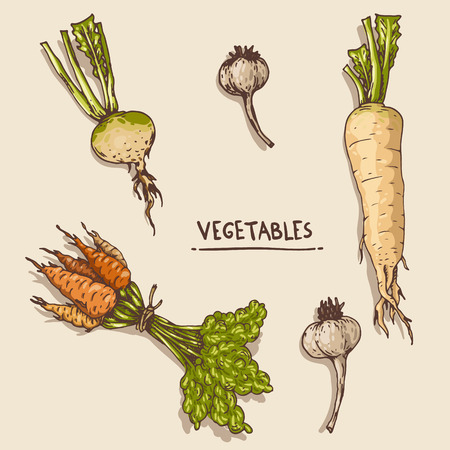 tuber: Set of the hand-drawn vegetables.