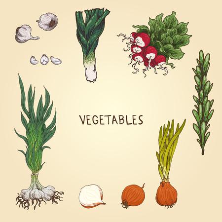 Set of the hand-drawn vegetables: leek, radishes, onion, garlic, rosemary. Illustration