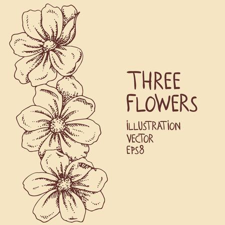 Three flowers  Illustration