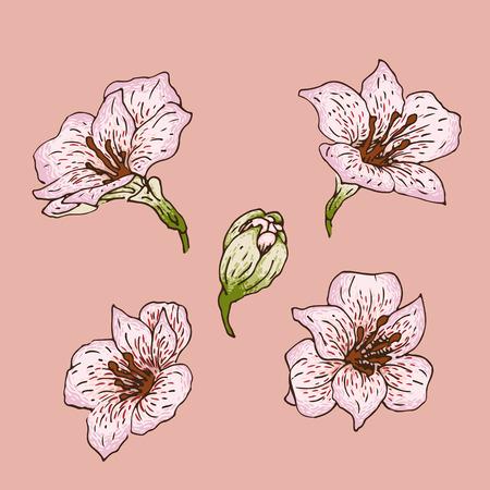 Set of hand-drawn flowers of  alstroemeria
