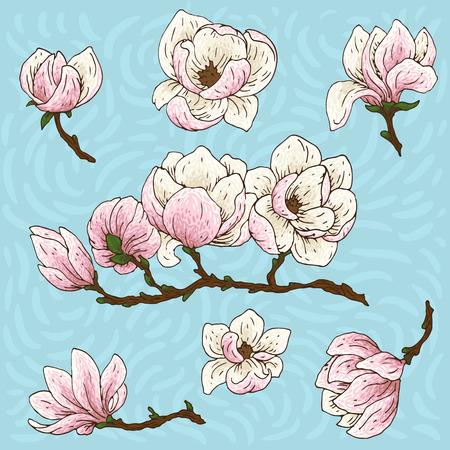 Set of hand-drawn magnolia flowers