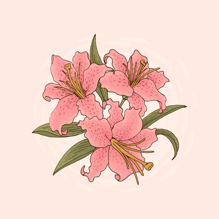 Hand-dtawn illustration of three pink lily