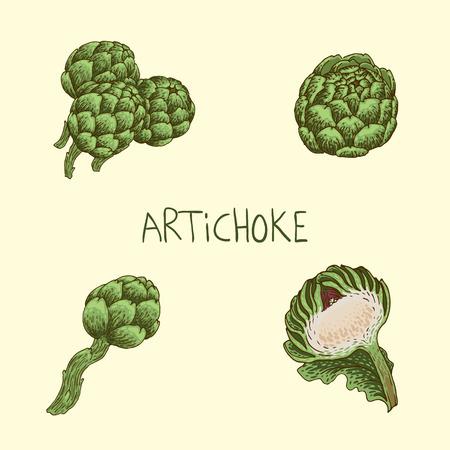 artichoke: Set of hand-drawn artichoke Illustration