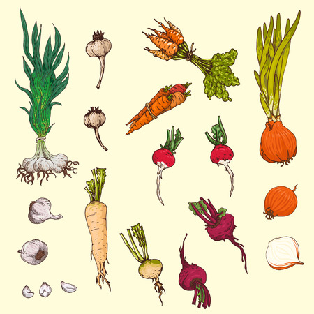 earthy: Set of hand-drawn root-crops.
