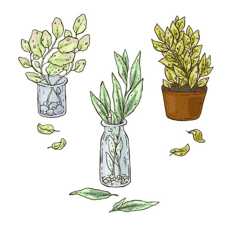 Vactor hand drawn set of plants in a bottle Illustration