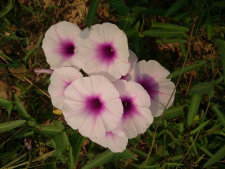 purple flowers: Cute purple flowers  Stock Photo