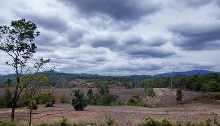 devastation: Forest Devastation for Agriculture Area