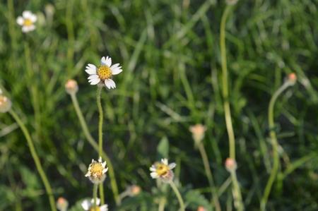 plains: Plains blackfoot
