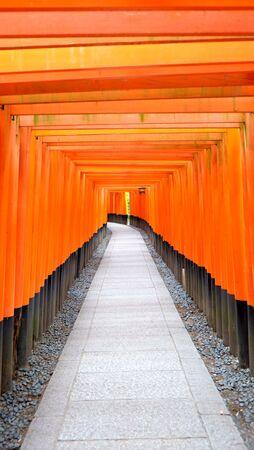 torii: torii tunnel. Stock Photo