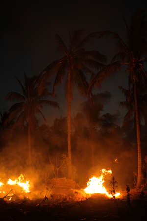 smoke stack: Fire and smoke in front of palm trees at night Stock Photo