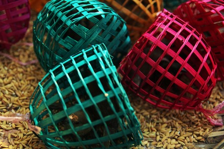 trapped: sparrows trapped in colourful traps surrounded by seeds