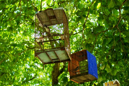 trapped: birds trapped in cages hanging in trees