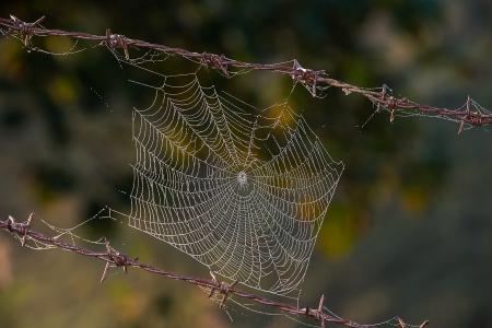 red: Hermosa tela de ara�a Foto de archivo