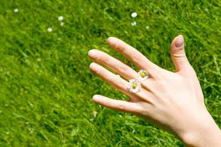 daisys: A hand with two daisys Stock Photo