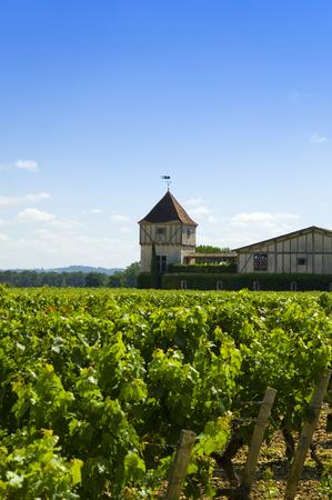 Winery neer Bordeaux