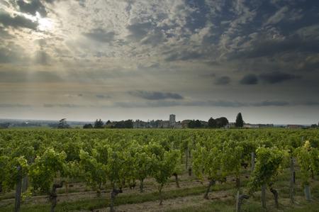 Vineyards near Bordeaux with an evening sky