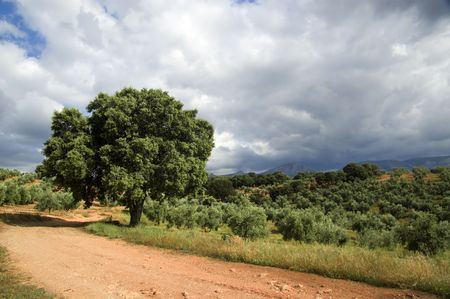 typical spanish landscape in andalusia
