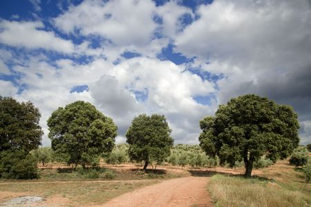 andalusien: Typische spanische Landschaft in Andalusien