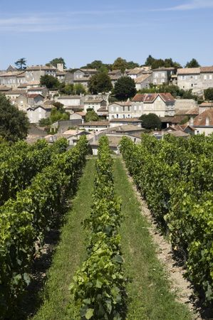 french countryside: French vineyard with the village of Saint Emilion in the background