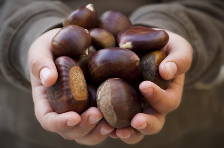 Close-up shot of  kids hands carrying chestnuts