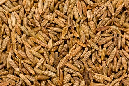 fennel seed: Background texture of fennel seeds. Stock Photo