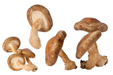 shitake: Composite of several shitake mushrooms against a white background. Stock Photo