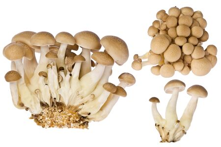 Composite of several beech mushrooms, or shimeji mushrooms against a white background. Фото со стока