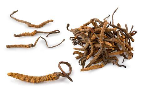 中国とチベットの伝統的な薬で使用されるいくつかの冬虫夏草菌類の複合体。 写真素材