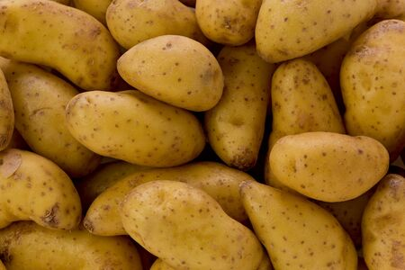fingerling: Background texture of several raw fingerling potatoes. Stock Photo