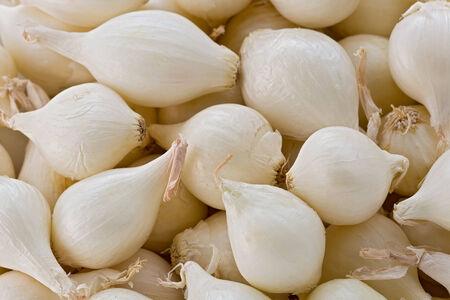 texture of white pearl onions. 版權商用圖片