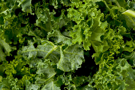 kale: Background texture of kale greens.