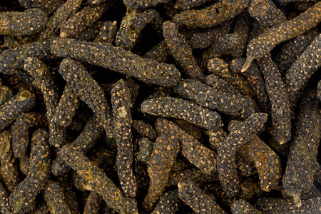 spice: Background texture of the spice long pepper. Stock Photo