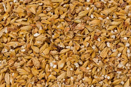 malted: Background texture of cracked malted barley. Stock Photo