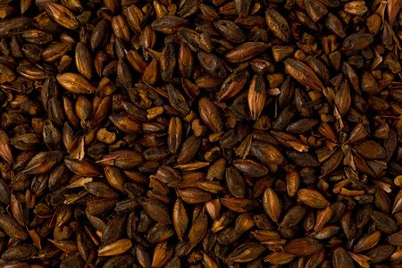 brewers: Background texture of chocolate brewers malt grains.