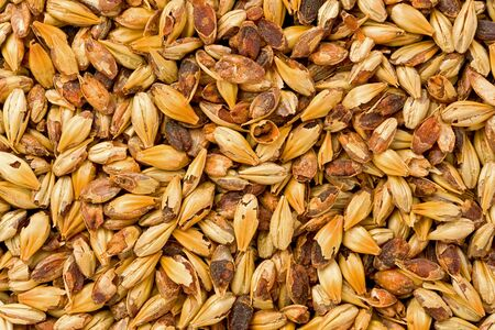 grains: Background texture of crystal 40L malt grains. Stock Photo