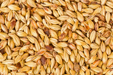 grains: Background texture of crystal 10L malt grains.