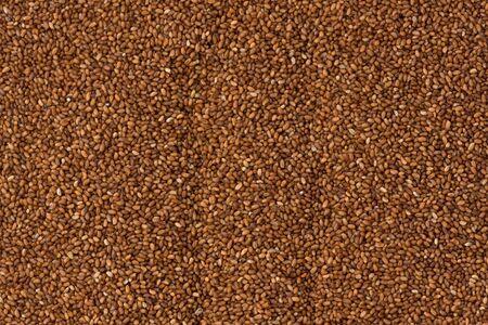 Achtergrond textuur van bruine Teff korrels.