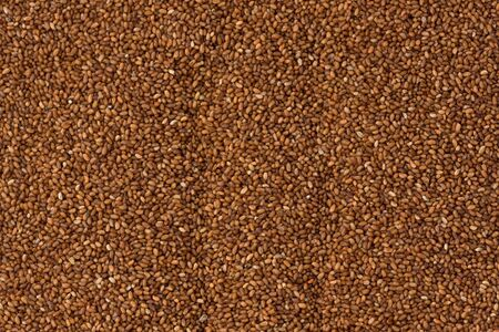 Background texture of brown Teff grains.