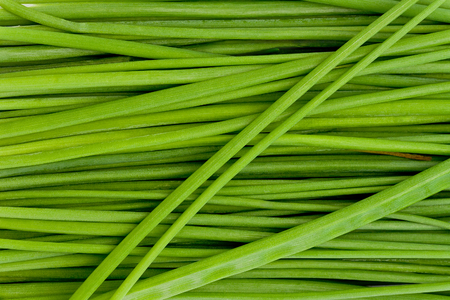 Background texture of several chive stalks.