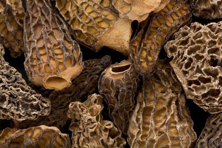 Background texture of several dried Morel, or Morchella, mushrooms.