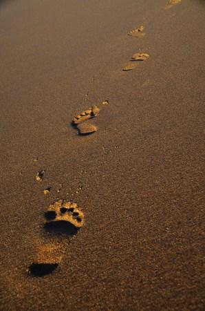 adult footprint: footprint Stock Photo
