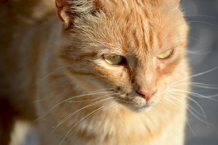 catlike: Cat