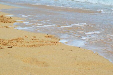 shore: Beach shore