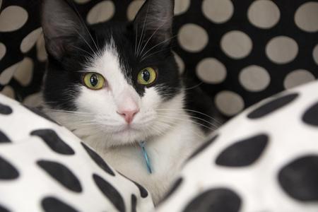 Portrait of a black and white cat, with green eyes Zdjęcie Seryjne