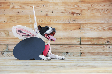 Beautiful dog in disguise with wings, on wooden background, and a black chalkboard to write a message. Archivio Fotografico