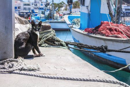 Black stray cat sitting in the port surrounded by mooring ropes and boats.